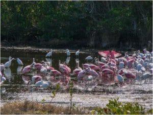 Rosa Loeffler In Den Everglades
