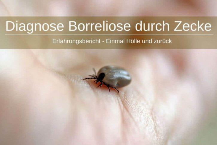 Diagnose Borreliose Zecke Symptome