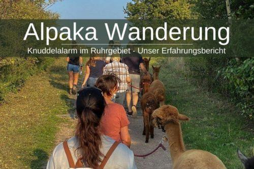 Alpaka Wanderung Ruhrgebiet