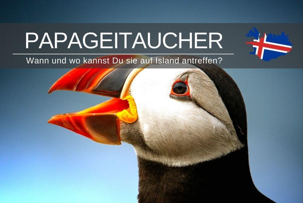 Papageitaucher In Island