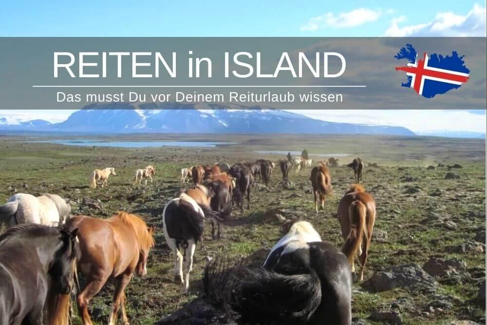 Reiten In Island Tipps