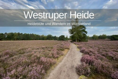 Westruper Heide Bluete