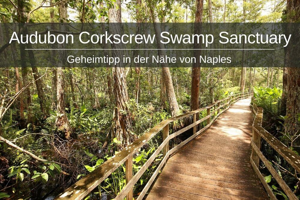 Audubon Corkscrew Swamp Sanctuary Naples