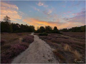 Westruper Heide (Haltern am See)