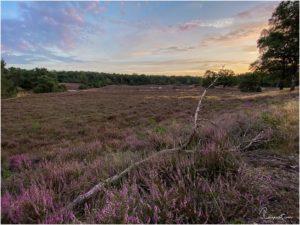 Westruper Heide in Haltern