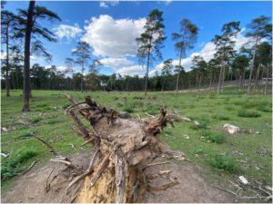 Naturwildpark Granat (Haltern am See)