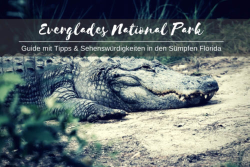 Everglades National Park Guide
