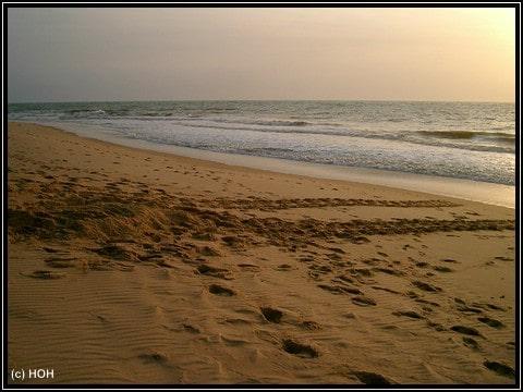 Schildkrötenspuren im Sand