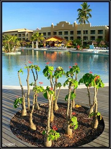Am Pool vom Iberostar Praia Do Forte