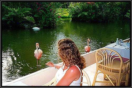 Flamingos beim Frühstück