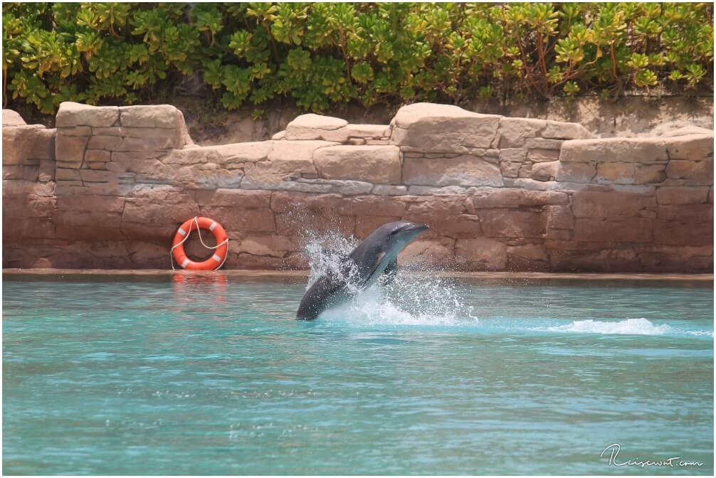 Dolphin Bay im Atlantis Hotel sollte man nach Möglichkeit besser meiden