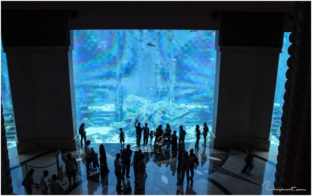 Das große Hauptaquarium wird stets umlagert von den Besuchern