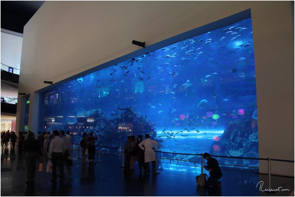 Das große Becken vom Dubai Aquarium kann man auch von außen betrachten