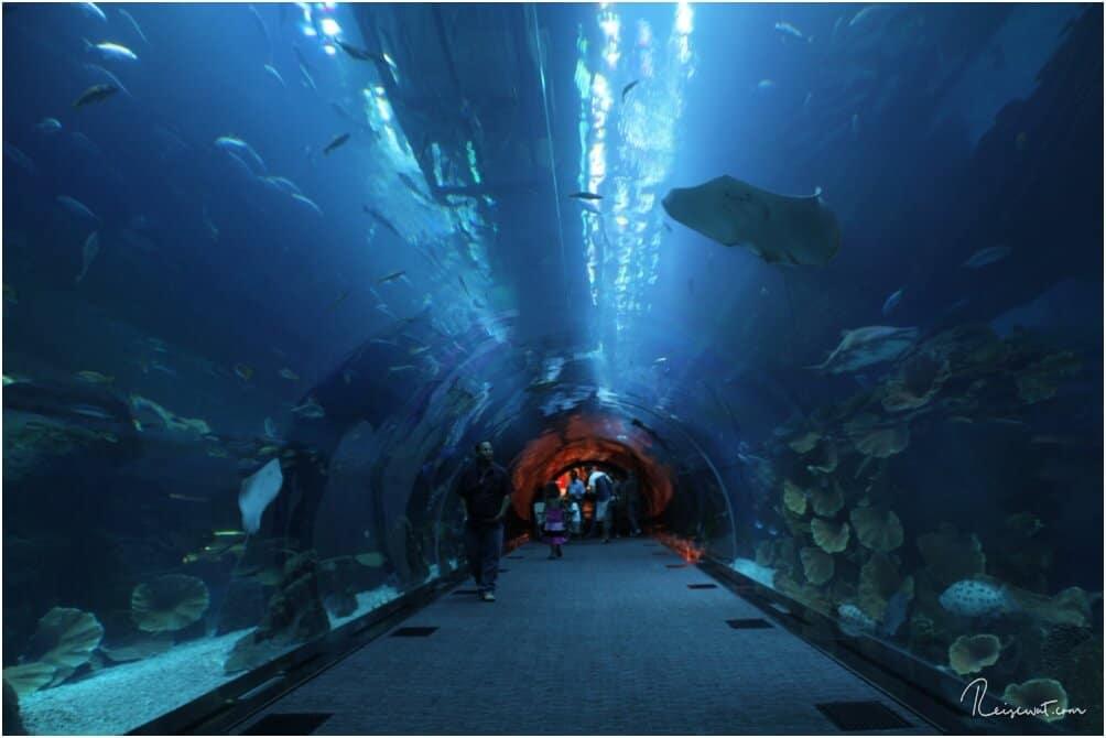 Der Glastunnel führt quasi durch das große Becken ins eigentliche Aquarium