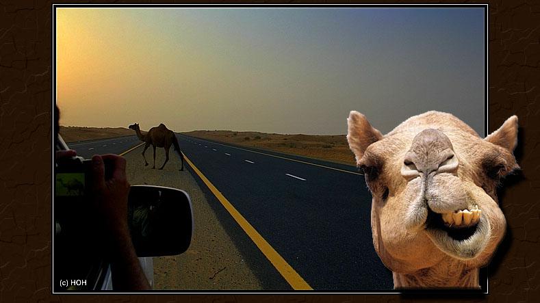Camel Xing