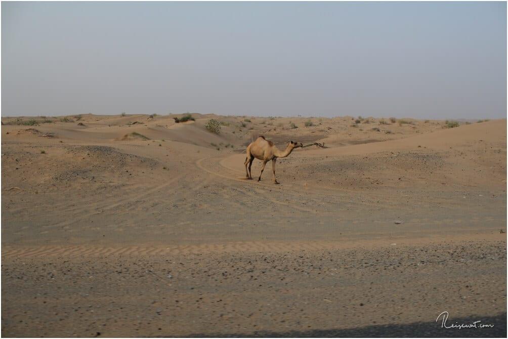 Unterwegs am Straßenrand ... nicht nur einmal sehen wir Kamele
