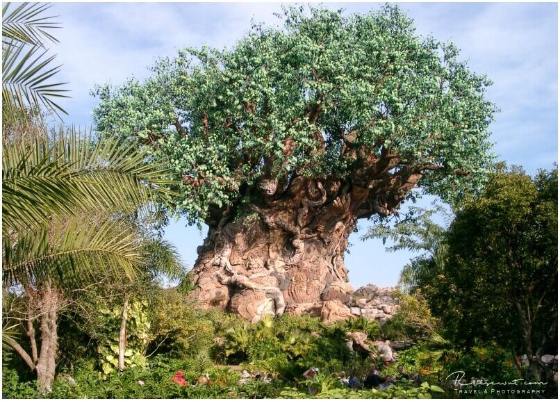 Der Tree of life in Animal Kingdom stellt quasi das Zentrum des Parks dar