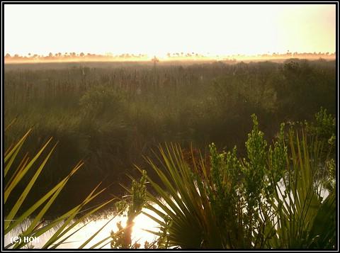 Die Everglades am frühen Morgen