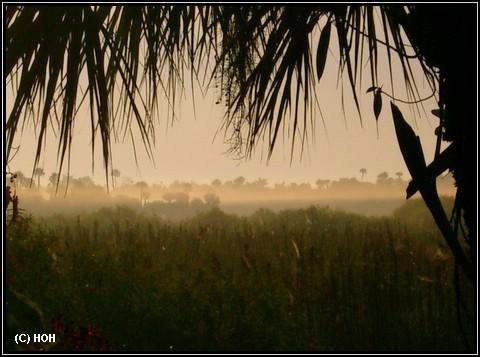 Die Everglades mit Frühnebel