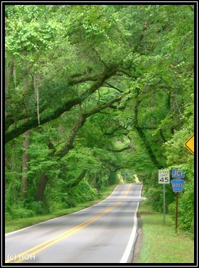 Canopy Road in Tallahassee