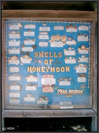 Muschelarten auf Honeymoon Island