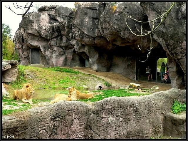 Loewengehege in Busch Gardens