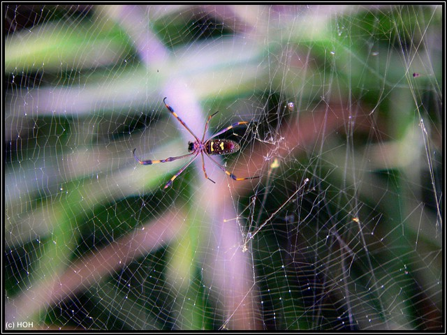 Auch wenn ich Spinnen nicht mag, sie sind ein klasse Fotomotiv