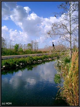 Am Tamiami Trail