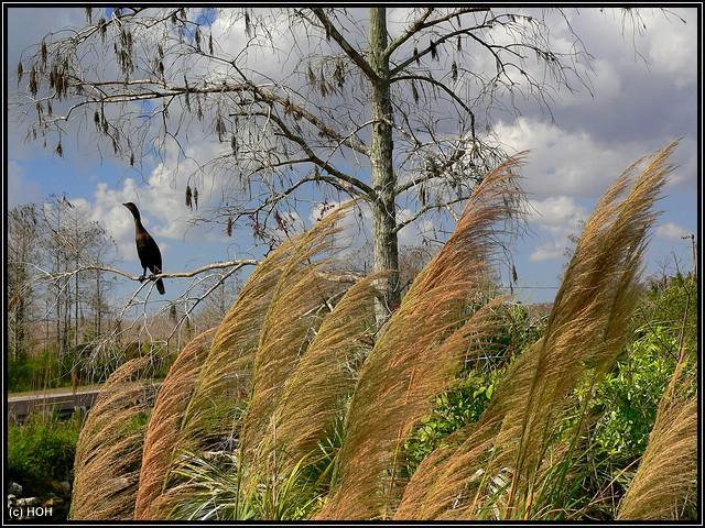 Am Big Cypress Visitor Center