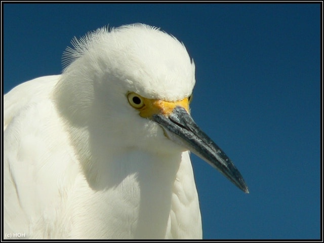 Sanibel Bird