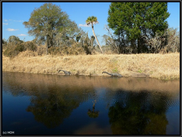 Zwei Alligatoren am anderen Ufer
