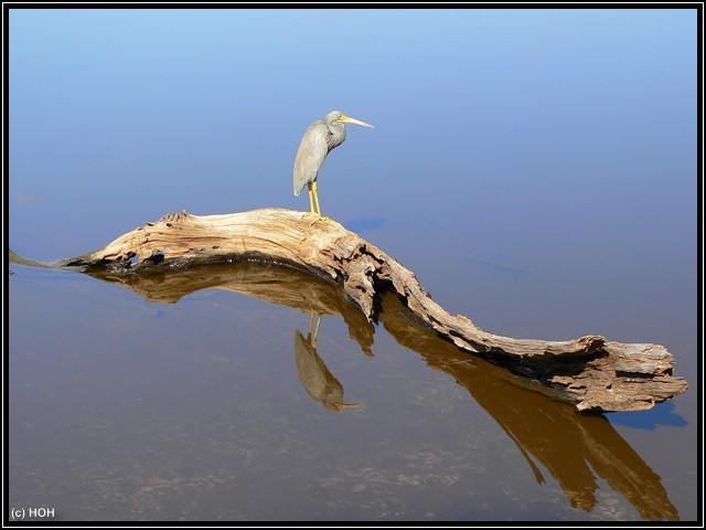 Tolle Reflexion im Wasser