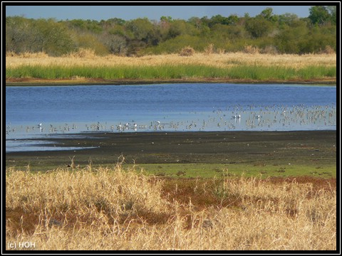 Aussicht auf den Myakka Lake vom Bird Walk aus gesehen ...