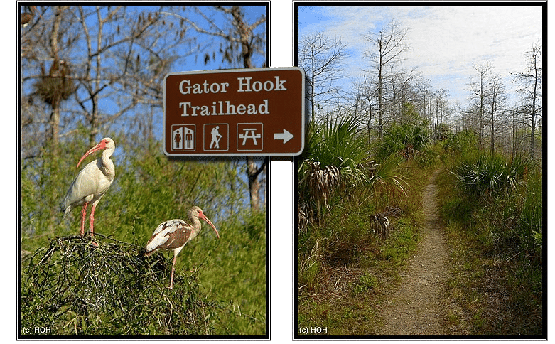 Gator Hook Trailhead an der Loop Road