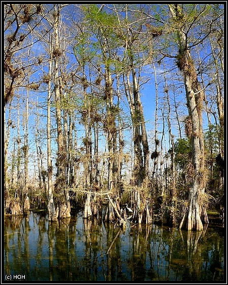 Big Cypress ... Loop Road Impression