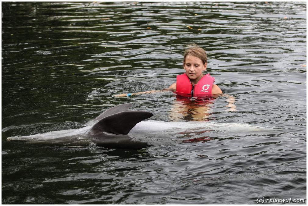 Delphinschwimmen Florida im Theatre of the Seas auf Islamorada