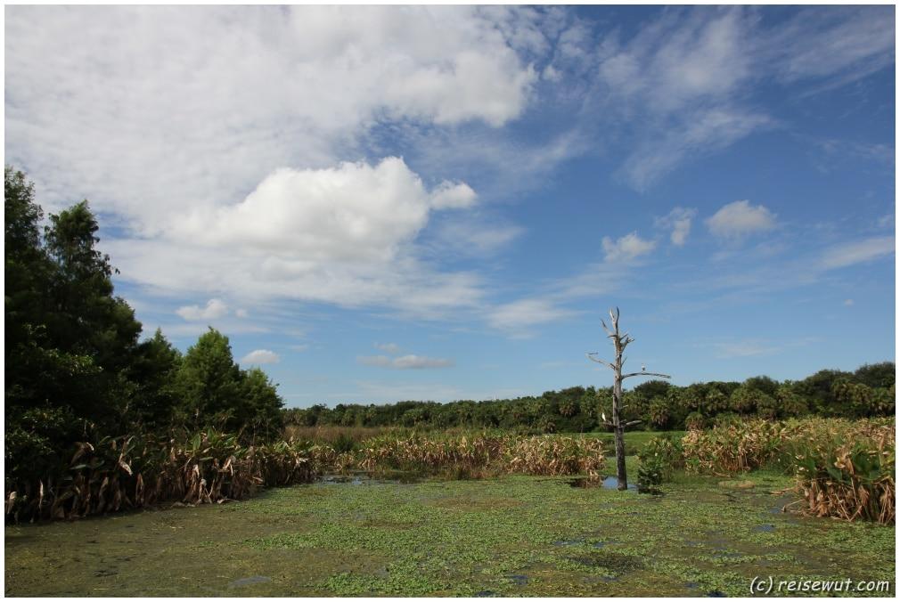 Die Green Cay Wetlands sind traumhaft schön