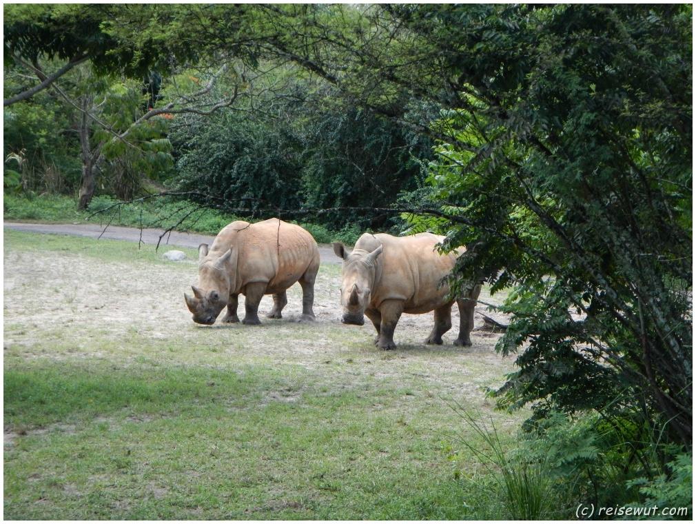 Und auch Nashörner bekommt man zu sehen
