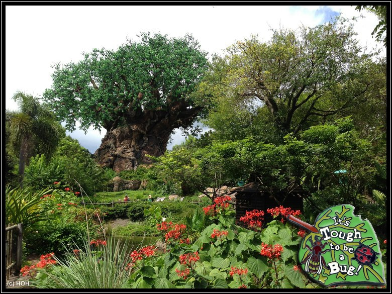 Tree of Life im Animal Kingdom