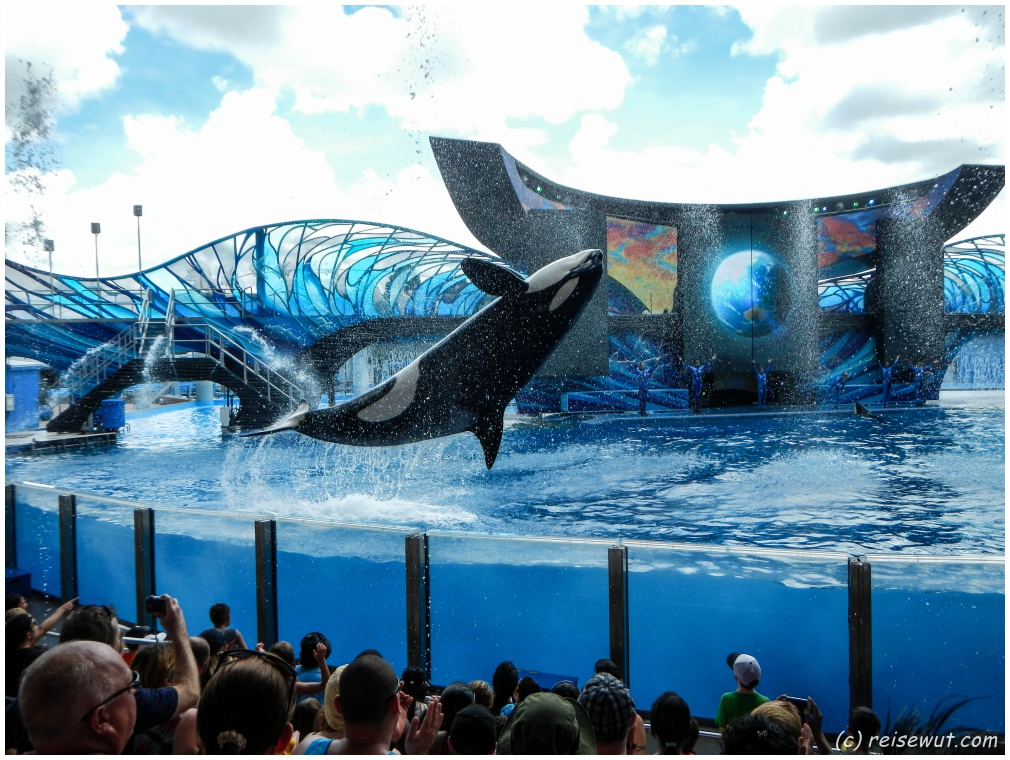 Shamu Show in Sea World