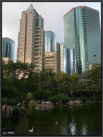 Flamingo-Gehege im Kowloon Park mit Blick auf einige Hochhäuser