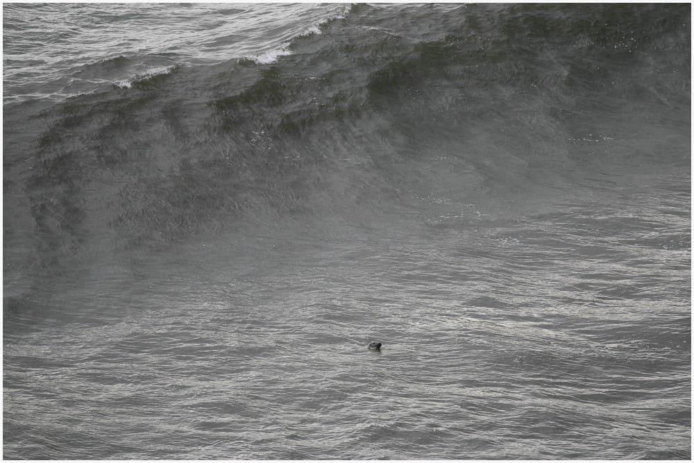 """Gestatten, Seelöwe """"Al"""" beim rumdösen und Spiel mit den Wellen"""