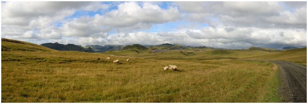 Nicht nur Pferde, auch Schafe sind irgendwie allgegenwärtig auf Island