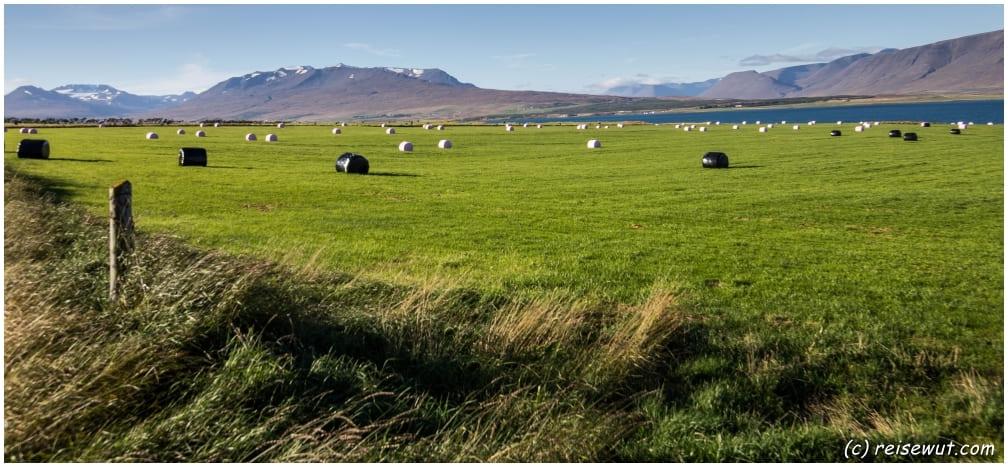 Feld bei Akureyri