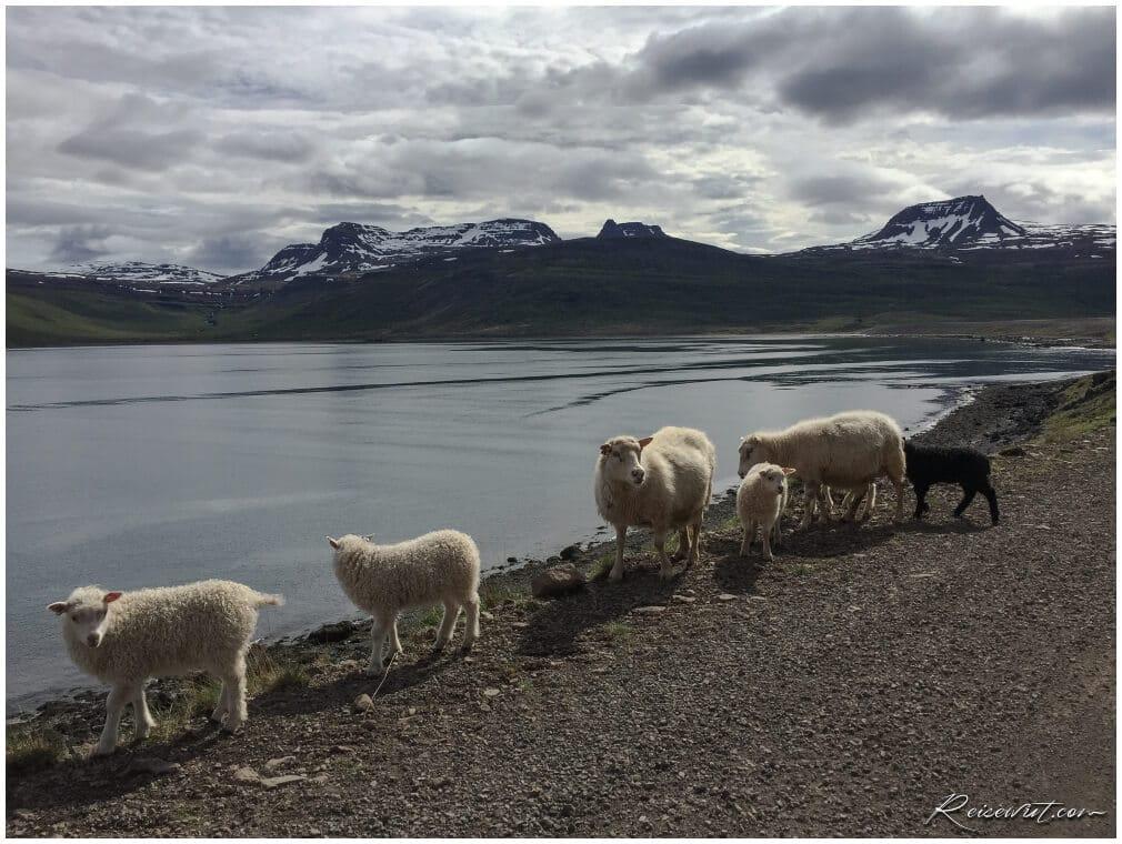 Typisch für Islands Westfjorde