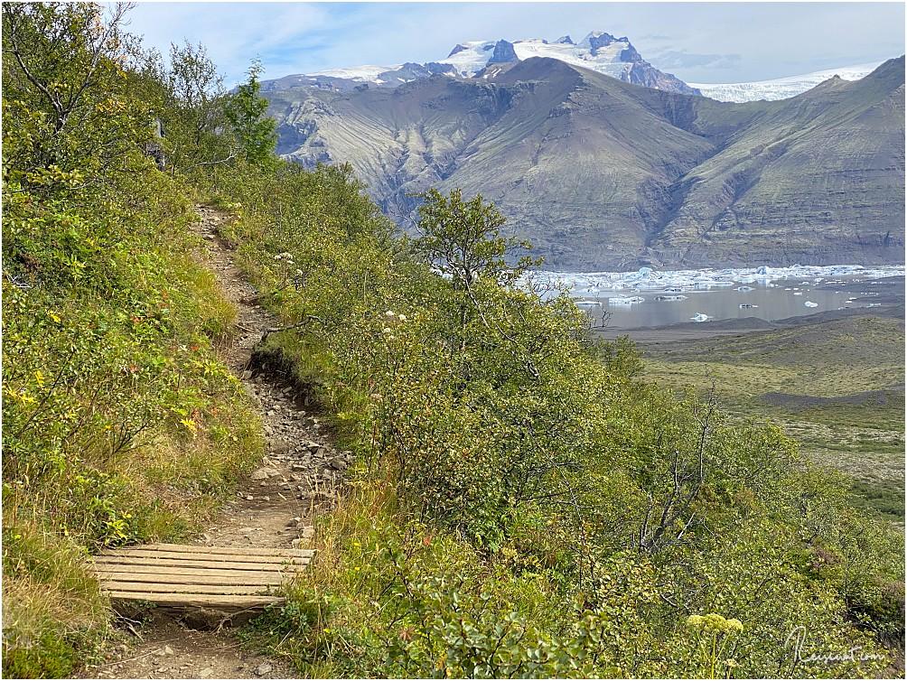 Der Trail führt schräg am Hang entlang, oftmals sieht man vor lauter Gestrüpp und Bäumen gar nicht, wohin man eigentlich läuft