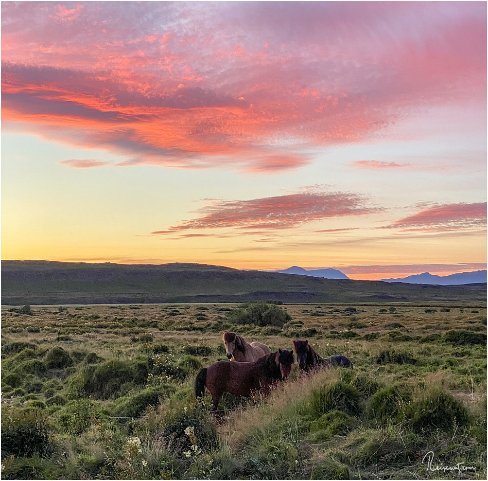 Islandpferde und Sonnenuntergang ... was will man mehr?