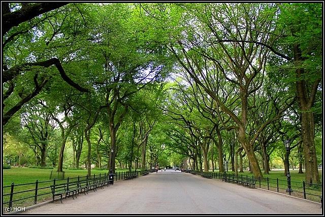 Allee im Central Park