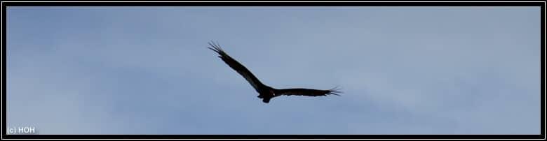Der zaghafte Versuch, einen Adler in der Luft zu knipsen
