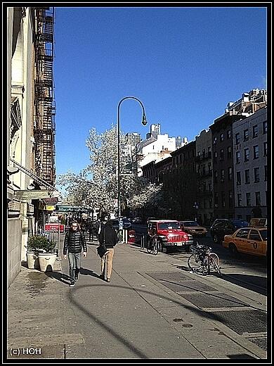 Auf dem Weg zur geschlossenen Highline kommen wir an einigen Blooming Spring Trees vorbei